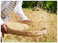 Provision of selling Paddy / Rice from home.